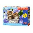 Puzzles Cute Kittens 60 Stücke