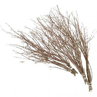 Birkenzweige 50-60 Cm 20 Stück Braun